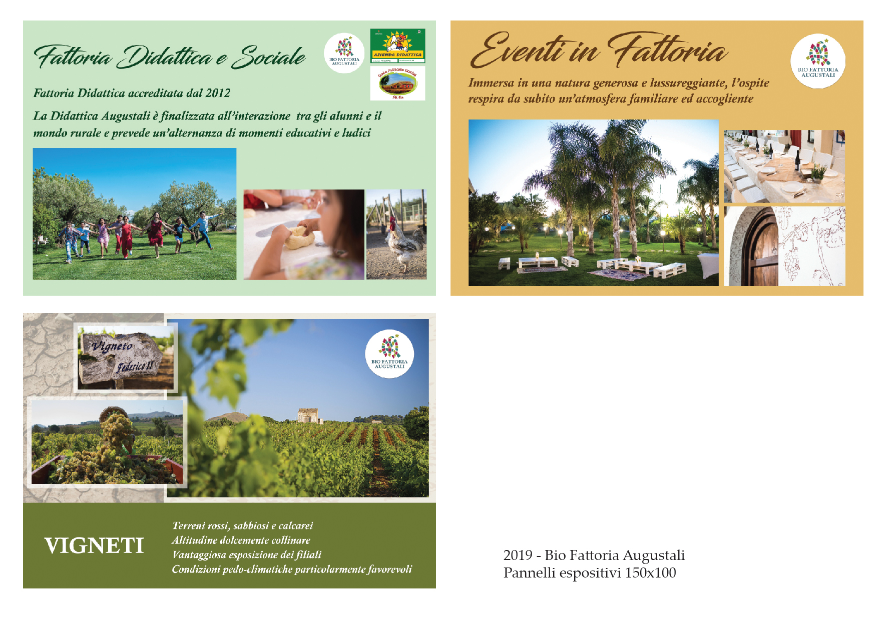 bio fattoria augustali _progetti grafici (1)